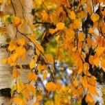 Осень...листья жёлтые.jpg