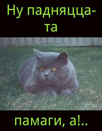 Кот Сирожа на даче...